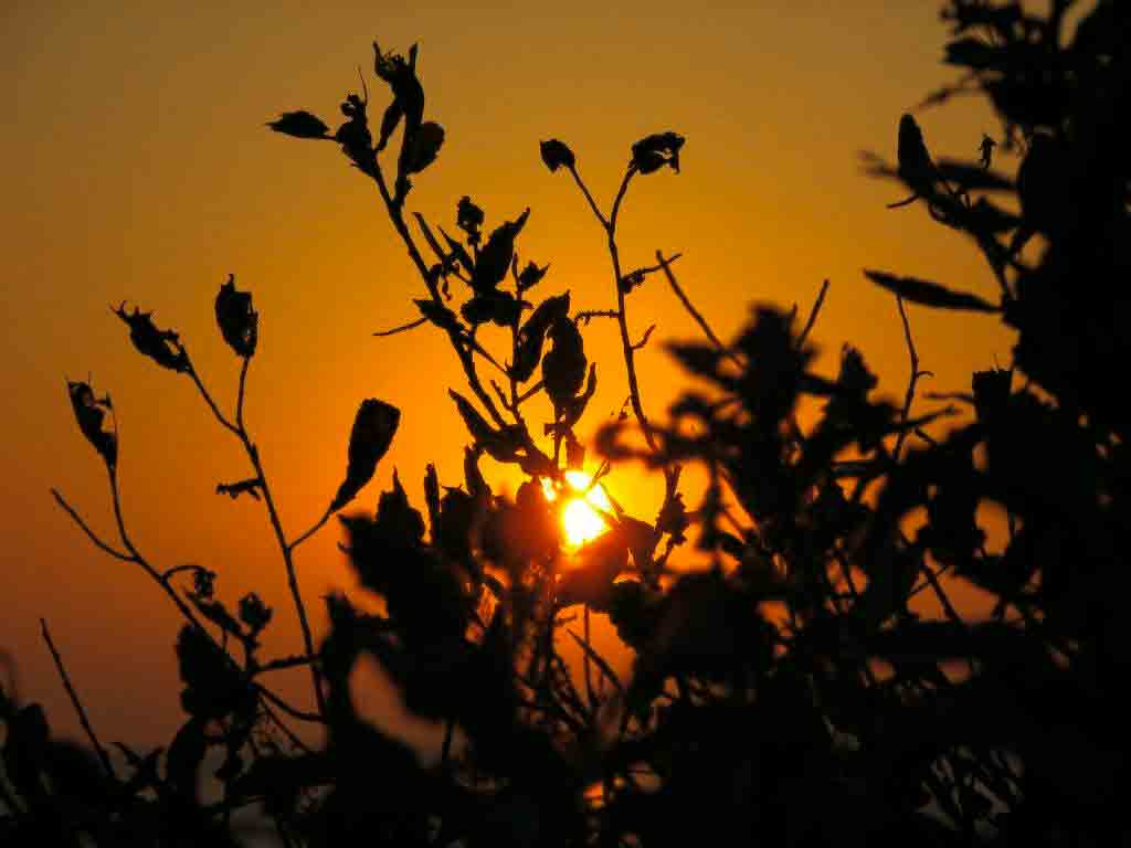 Photo of sunset through weeds